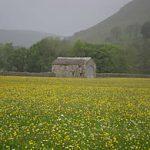 Hay_meadows_Muker2